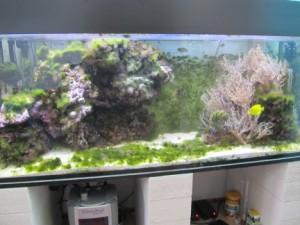 Aquarium ohne Osmose