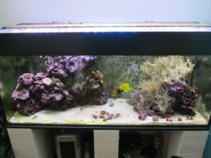 Aquarium sauber